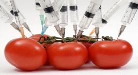 Главный Вред ГМО Продуктов — Не Дай Себя Убить