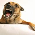Боязнь Собак — Самая Распространенной Фобия